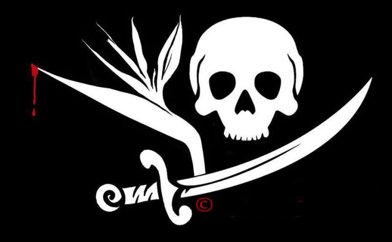 Pirates & Paradise